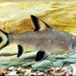 ชนิดและประเภทปลาสวยงามทีนิยมเลี้ยง
