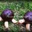 โคมไฟกะลามะพร้าวรูปเต่า thumbnail 1
