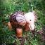 โคมไฟกะลามะพร้าวช้างก้านกล้วย thumbnail 2