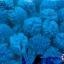 ปอมปอมไหมพรม สีฟ้า 1ซม (100ชิ้น) thumbnail 1