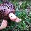 โคมไฟกะลามะพร้าวรูปเต่า thumbnail 2