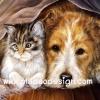 กระดาษสาพิมพ์ลาย สำหรับทำงาน เดคูพาจ Decoupage แนวภาพ ลูกแมวตัวน้อยหาความอบอุ่น นอนซุกพี่หมาหน้าใหญ่ใจดี