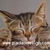 กระดาษสาพิมพ์ลาย สำหรับทำงาน เดคูพาจ Decoupage แนวภาพ โคลสอัพแมวนอนหลับ หน้าใหญ่มาก น่ารักที่สุด