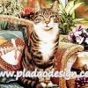 กระดาษสาพิมพ์ลาย สำหรับทำงาน เดคูพาจ Decoupage แนวภาำพ น้องแมวสีสวยตัวเดิม นั่งรอเจ้านายพาไปเที่ยวบนเก้าอี้หวายชมสวน
