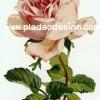กระดาษสาพิมพ์ลาย สำหรับทำงาน เดคูพาจ Decoupage แนวภาำพ ภาพวาด กุหลาบสีชมพูอมส้ม ดอกเดี่ยว ดอกใหญ่มาก เป็นภาพแบบวินเทจ vintage (ปลาดาวดีไซน์)