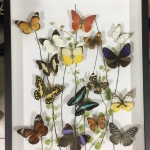 Real Butterfly Art Desing in Premium Box