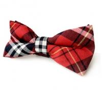 หูกระต่ายเด็ก, Bow tie