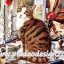 กระดาษสาพิมพ์ลาย สำหรับทำงาน เดคูพาจ Decoupage แนวภาำพ เจ้าแมว3สี นั่งเฝ้าเจ้าของทำงานประดิษฐ์ ชิ้นงานเก๋ๆ thumbnail 1