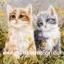 กระดาษสาพิมพ์ลาย สำหรับทำงาน เดคูพาจ Decoupage แนวภาพ แมวเพื่อนซี้ขนยาว 2 ตัว 2 สี ทำหน้าฉงนอยู่ในทุ่งหญ้า thumbnail 1