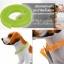 dooda ปลอกคอไล่เห็บ หมัด ไร และยุง สีส้ม สำหรับแมวและสุนัข thumbnail 6