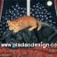 กระดาษสาพิมพ์ลาย สำหรับทำงาน เดคูพาจ Decoupage แนวภาพ แมวขนทองนอนบนหลังเพื่อนซี้ต่างสายพันธู์ พี่หมาดำอย่างมีความสุข thumbnail 1