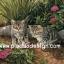กระดาษสาพิมพ์ลาย สำหรับทำงาน เดคูพาจ Decoupage แนวภาพ 2 แมวเหมียวเพื่อนรัก วิ่งเ่ล่นกับมิตรใหม่ผีเสื้อตัวสวย thumbnail 1